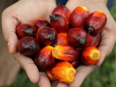 Rohstoffe: Mehr sauberes Palmöl