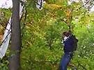 Kopfüber in den Bäumen (Bild)