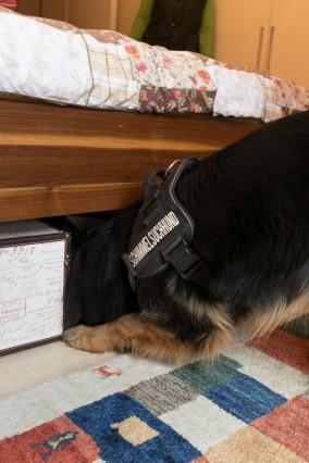 Hundeführerin Sonja Stephani mit Schimmelsuchhund Nala