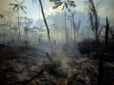 Naturschutz vom Bücherstapel: Schreibhausgase