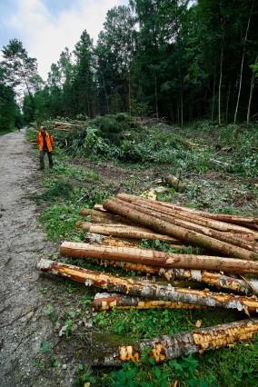 Unwetterschäden Ebersberger Forst.