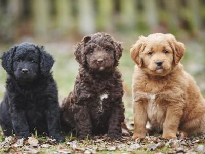 Hunde: Wie man unseriöse Züchter erkennt