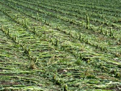 Landwirtschaft in Ebersberg: Gewitter und Hagel machen Landwirten zu schaffen