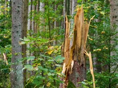 Natur und Umwelt: Ebersberger Forst: Klimawandel vor der Haustür