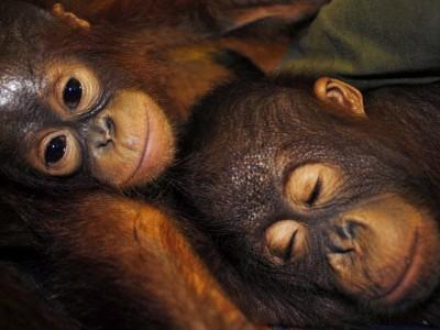 Artenschutz: Mensch und Igel