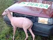 Crashtest mit Tieren