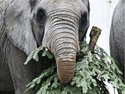 elefant und christbaum