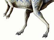 Dinosaurierbeine, afp