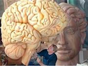 Gehirnmodell; dpa