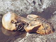 Ötzi nach dem Fund; dpa