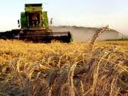 Getreideernte: ddp