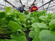 Biobauern, dpa