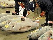 Thunfisch Handel