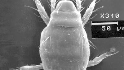 Biologie bizarr Serie: Bio bizzar (1)
