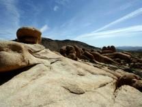 Die Wüste blüht: Joshua Tree National Park, AFP