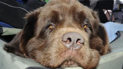 Stadtleben Prozess um einen traumatisierten Hund