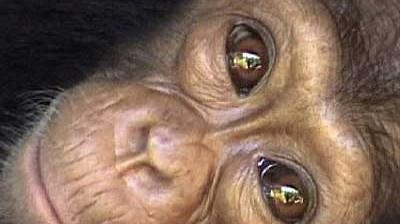 Altruismus im Tierreich