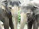 Elefanten mit Selbstbewusstsein