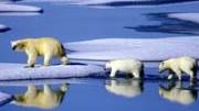 Eine Eisbärenmutter marschiert mit ihren beiden Jungen auf Futtersuche über Eisschollen im Gebiet der Nordwest-Passage in Kanada