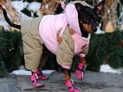 Hund mit Schuhen;AFP