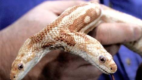Schlangen Bizarres Angebot