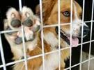 DNS-Test überführt Hund der Vaterschaft (Bild)
