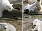 Knut löst Besucherstau aus (Bild)