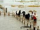 Drei Tote bei Überschwemmungen (Bild)