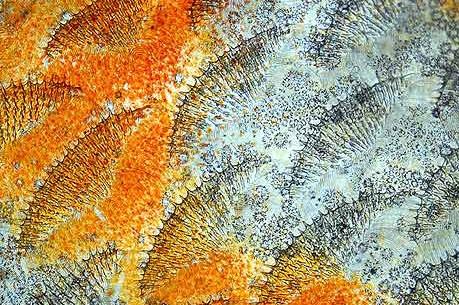 Mikroskop bilder dieses bild zeigt die schuppen mikroskopie