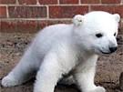Knut und sein Ziehvater (Bild)