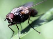 Fliege, ddp