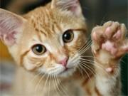 Katzen, iStock