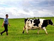 Landwirtschaft, dpa