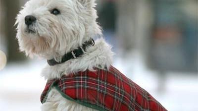 Gadgets für Hunde
