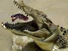 A new Crocodile Dundee (Bild)