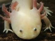 Axolotl, Helene Hegemann; dpa