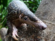 Tierart vom Aussterben bedroht, dpa