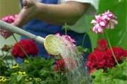 gartengestaltung - garten für faule gärtner - geld - süddeutsche.de, Garten ideen