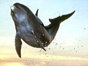 Wie dumm sind Delphine?