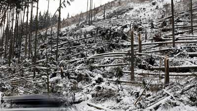 Kyrill legt sechs Millionen Bäume um