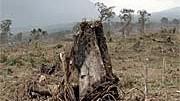 Brandrodung Palmöl