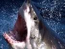 Taucher prügelt Hai in die Flucht (Bild)