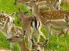 Zootiere zum Verzehr verkauft (Bild)
