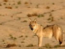 Wolfs Revier (Bild)