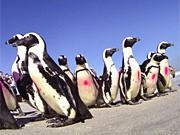 Rote Liste, Pinguine, dpa