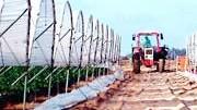 Anbau von Erdbeeren