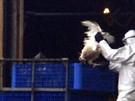 Hochansteckendes H5N1-Virus bestätigt (Bild)