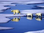 Umweltfreundliches Investment, Foto: dpa