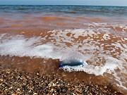 Deepwater Horizon Ölfilm; AFP