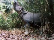 Java-Nashorn, dpa